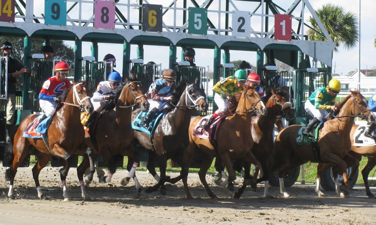 Free Fat Tuesday SmartCap Horse Racing picks for the Mardi Gras Stakes at the Fair Grounds