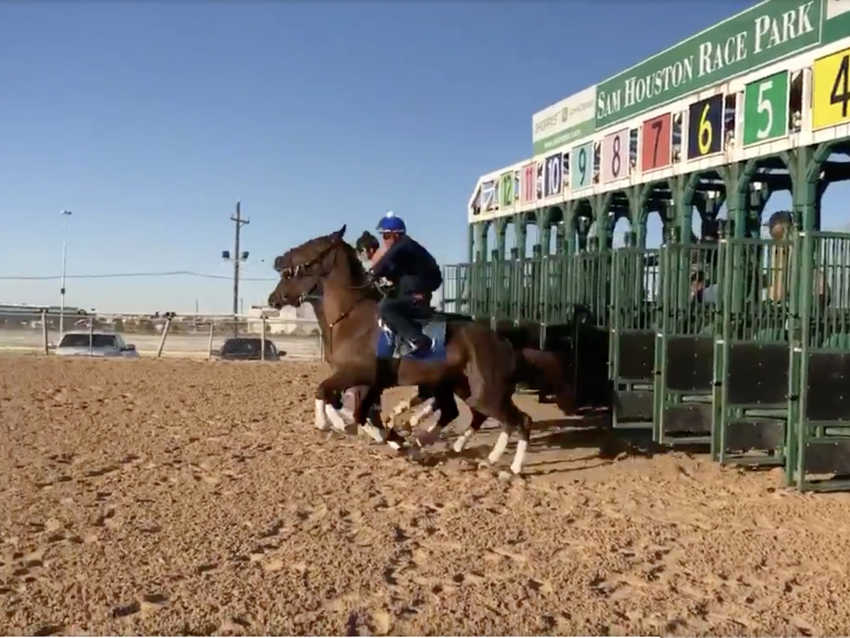 Free Wednesday SmartCap Horse Racing Pick for the 7th at Sam Houston Race Park, a $50K Optional claimer going six furlongs