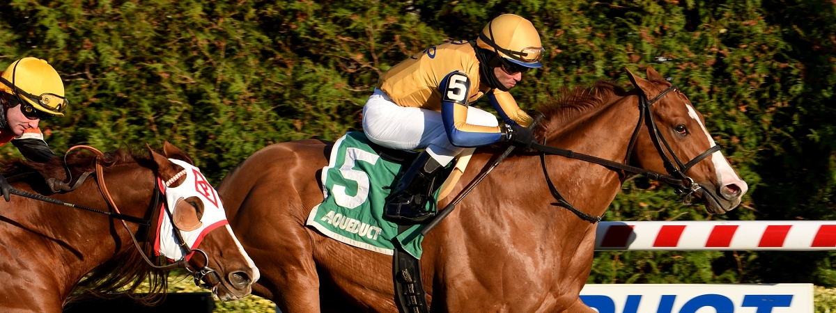 Curlins Honor, winning the Artie Schiller at Aqueduct, races today at Gulfstream.