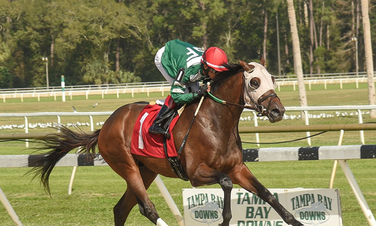 Horse Racing Wednesday: Garrity is dodging lousy weather in picking races at Tampa Bay Downs, Sam Houston Race Park, and Gulfstream Park