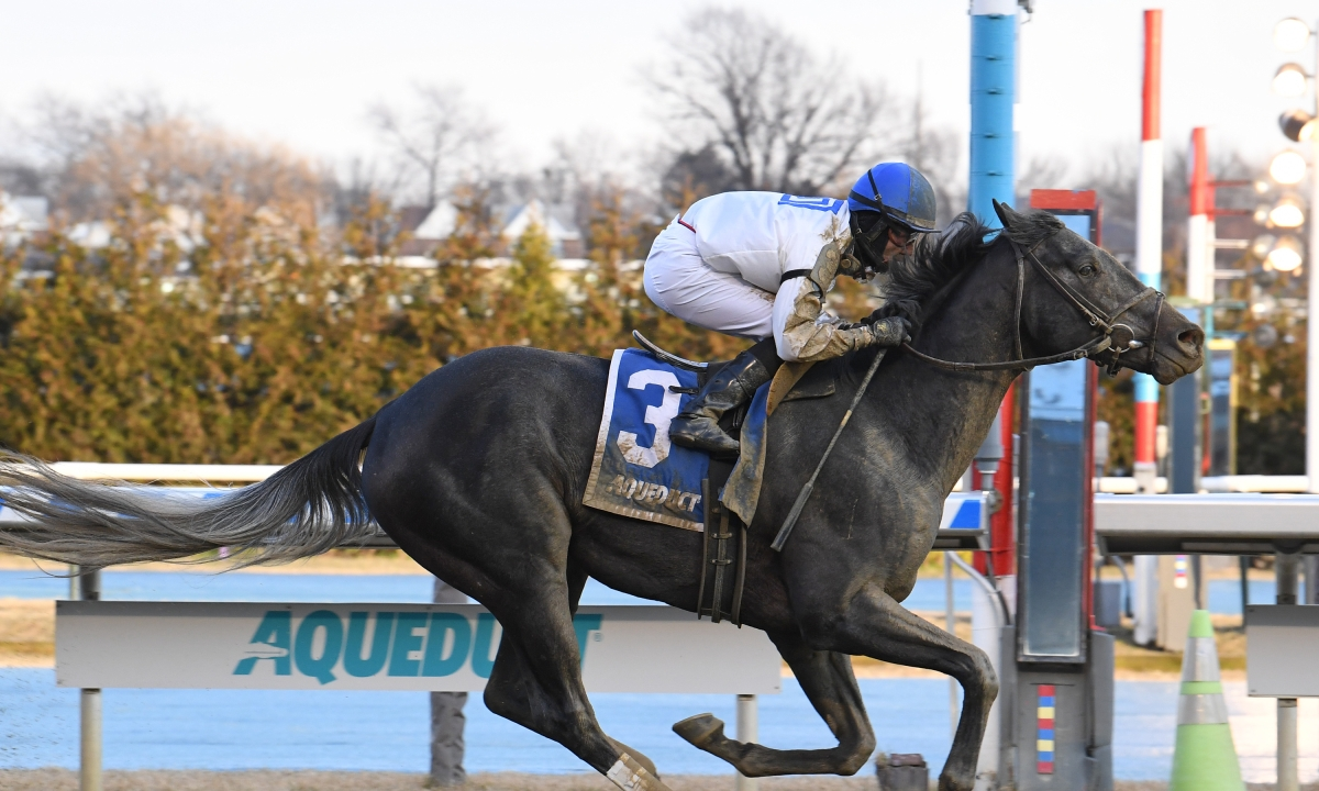 RT picks the Lambholm South Tampa Bay Derby and the Gotham from Aqueduct