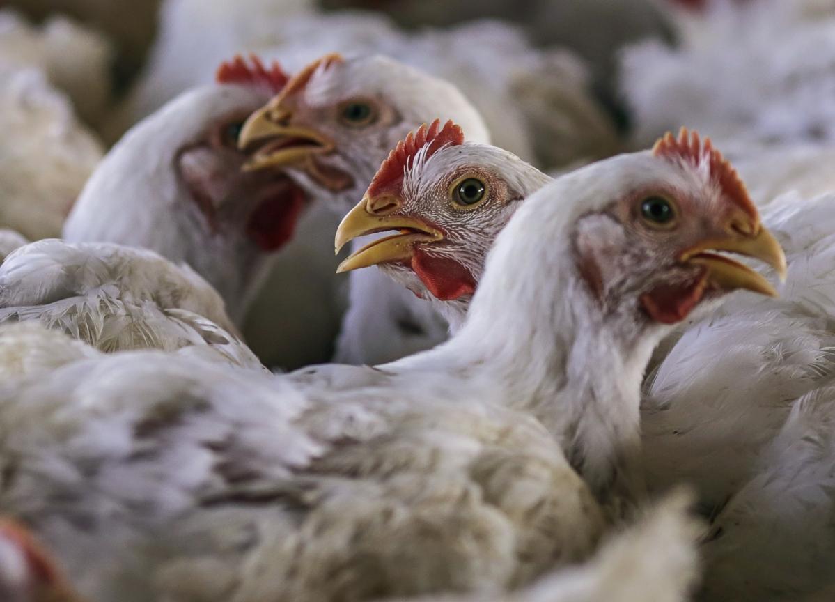 Coronavirus Does Not Spread Through Chicken, Mutton, Seafood: FSSAI Chief
