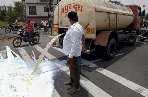 Farmers from Ahmednagar spill milk down a road during a state-wide protest, in Pune. (Source: PTI)