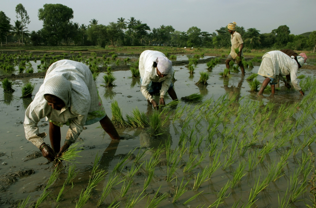 Farmers plant rice in the paddies near Madur, India. (Photographer: Namas Bhojani/Bloomberg News)