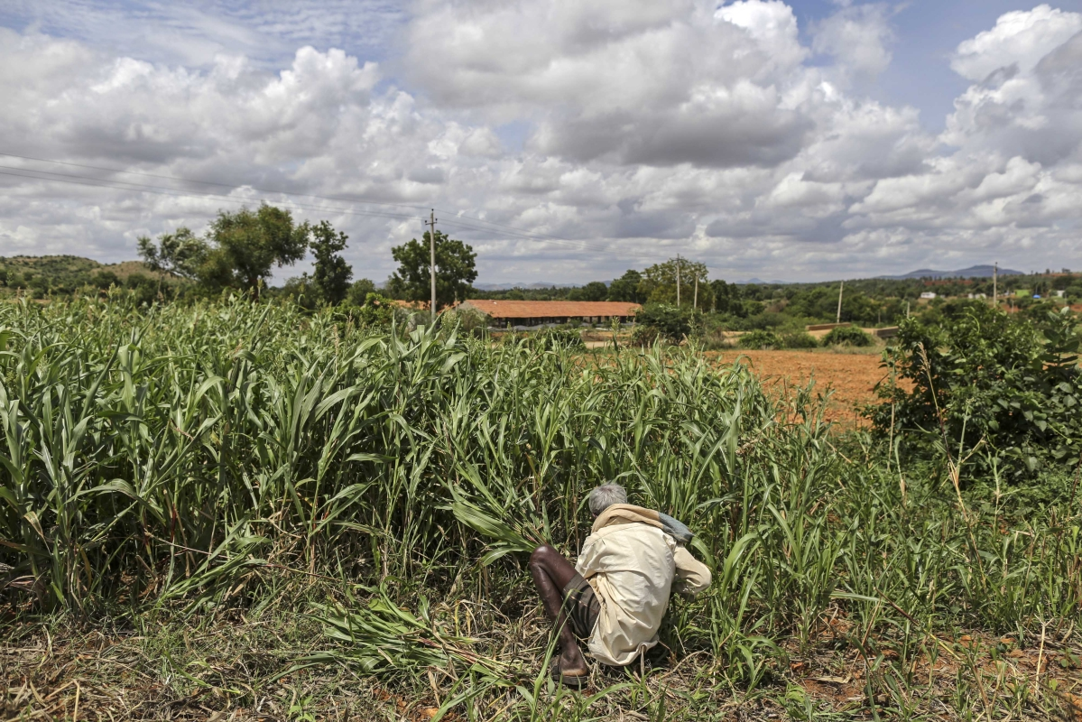 Wage Growth As Critical As Farm Incomes To Ease Rural Distress: India Ratings