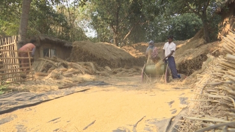 Farm hands threshing paddy in Birbhum, West Bengal. (Source: BloombergQuint)