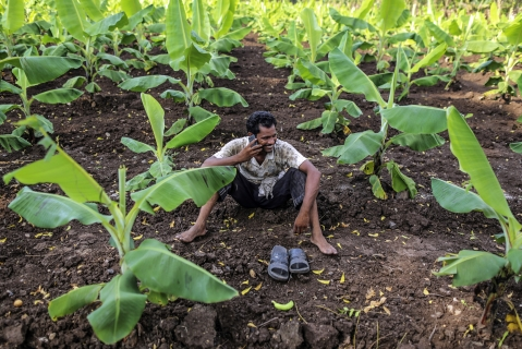 A farm worker talks on a mobile phone on a field in Bhusawal, Maharashtra. (Photographer: Dhiraj Singh/Bloomberg)