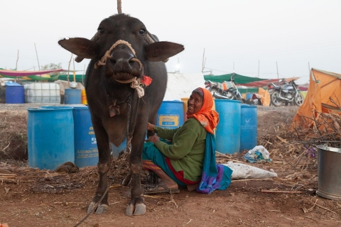 Lilabai Virkar is hoping to keep her animals alive through the drought. (Photographer: Binaifer Bharucha/People's Archive of Rural India)