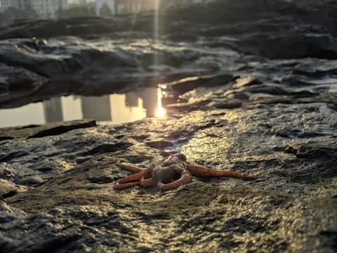 An octopus on the shore at Worli, Mumbai. (Photograph: with permission from Shaunak Modi)