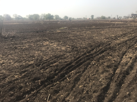 The barren cotton field belonging to Vilas Parjane of Khalapuri village in Beed district in Maharashtra. (Photo: Ashwini Priolker/BloombergQuint)