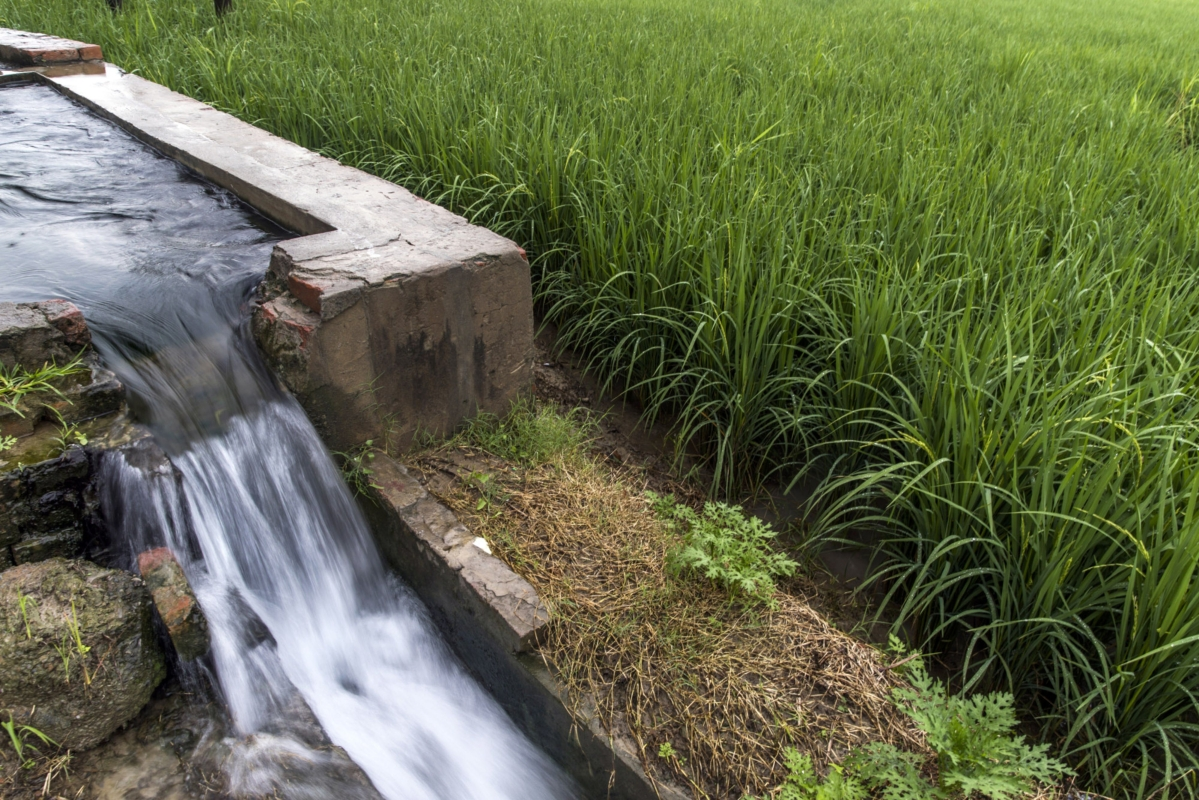 In Water-Stressed India, Farmers May Be Asked To Irrigate Less