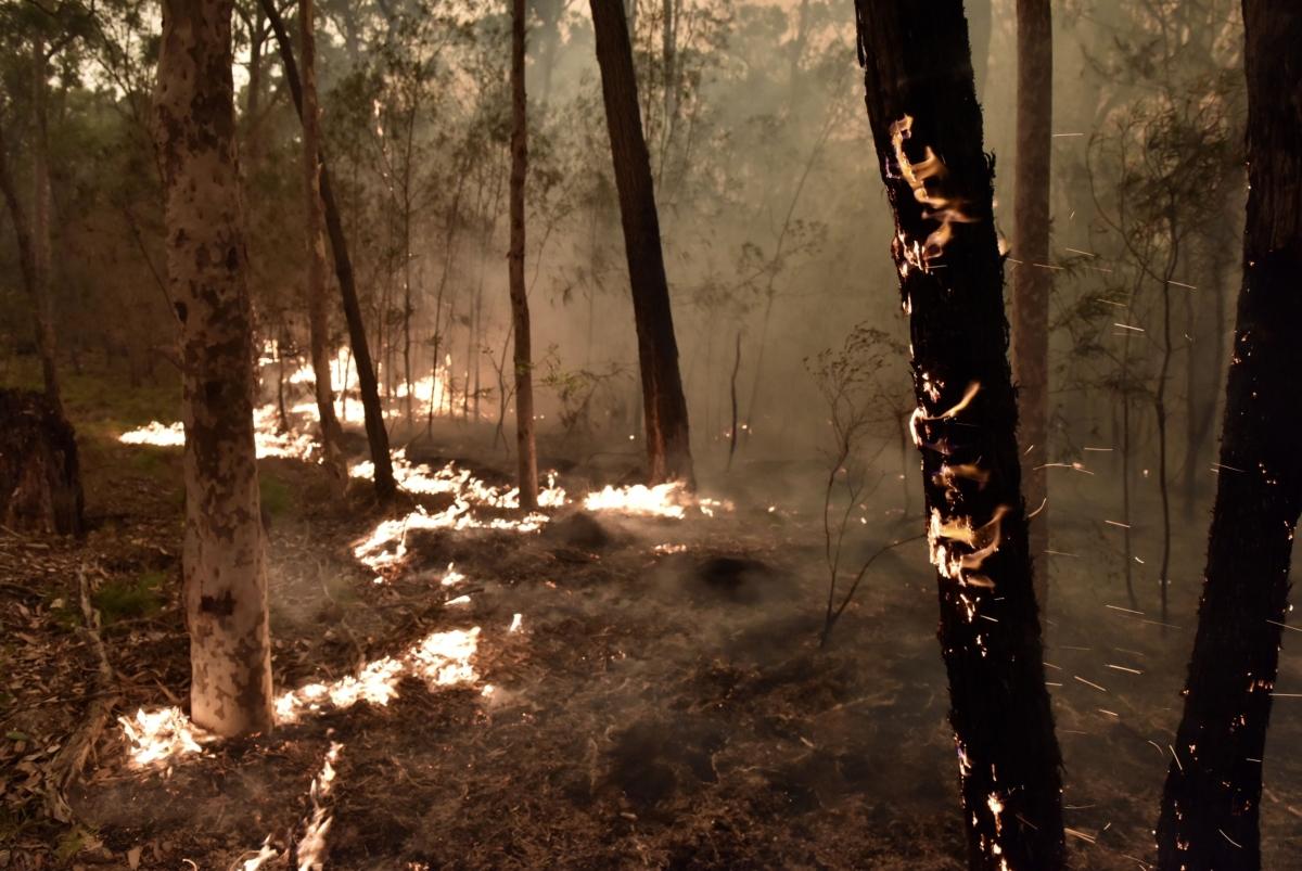 Fire burns in bush land in Batemans Bay, New South Wales, Australia. (Photographer: Mark Graham/Bloomberg)