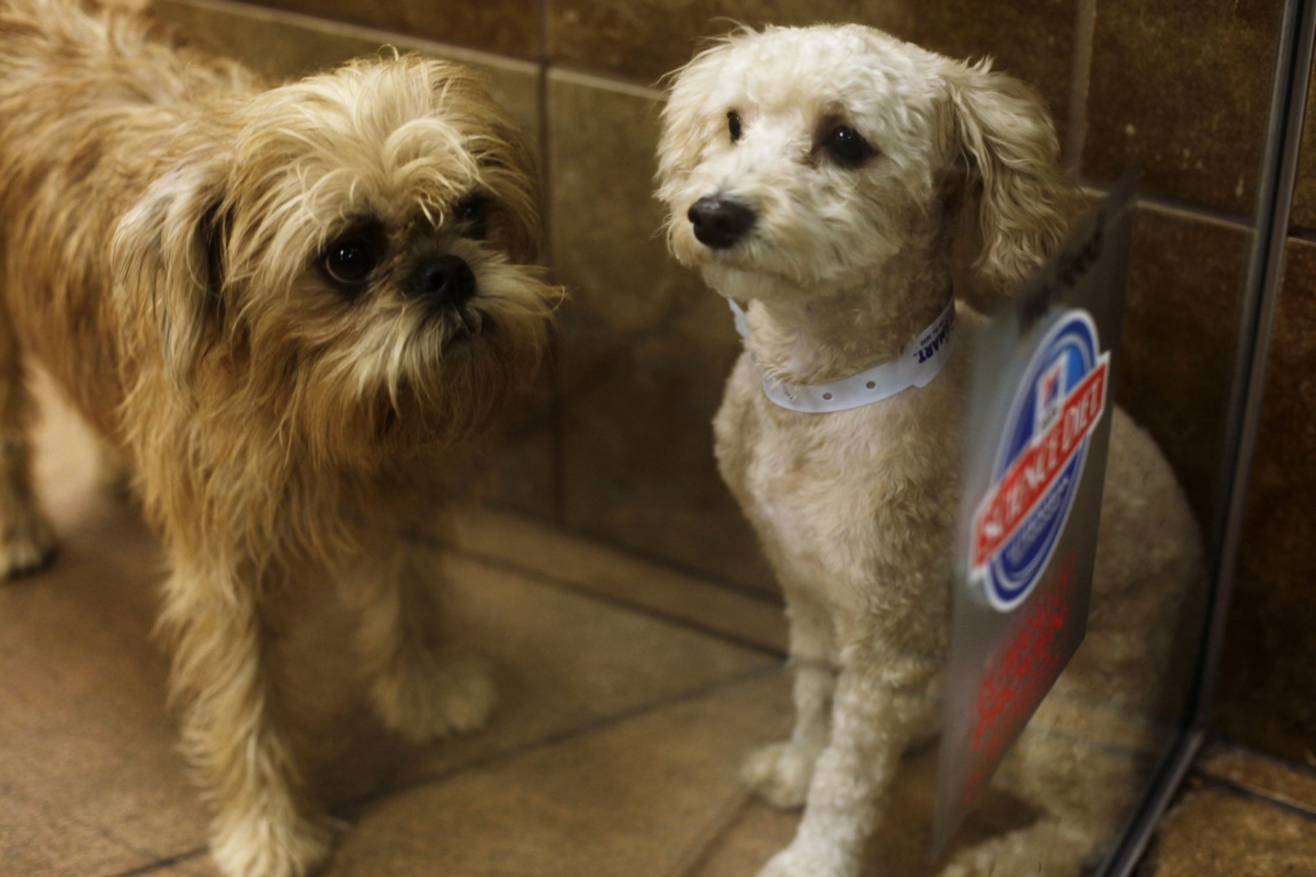 Newest Shortage In New York: The City Is Running Out Of Dogs To Foster