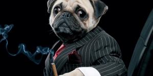 Will the pug charm Dalal Street?