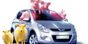 Stock options for Hyundai