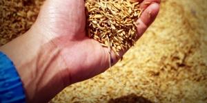 Mahindra Agri Solutions-Sumitomo JV bets big on crop care