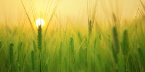Agribusiness: The latest sector embracing digital technology