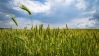 Agrochemicals: Shining bright amid the gloom