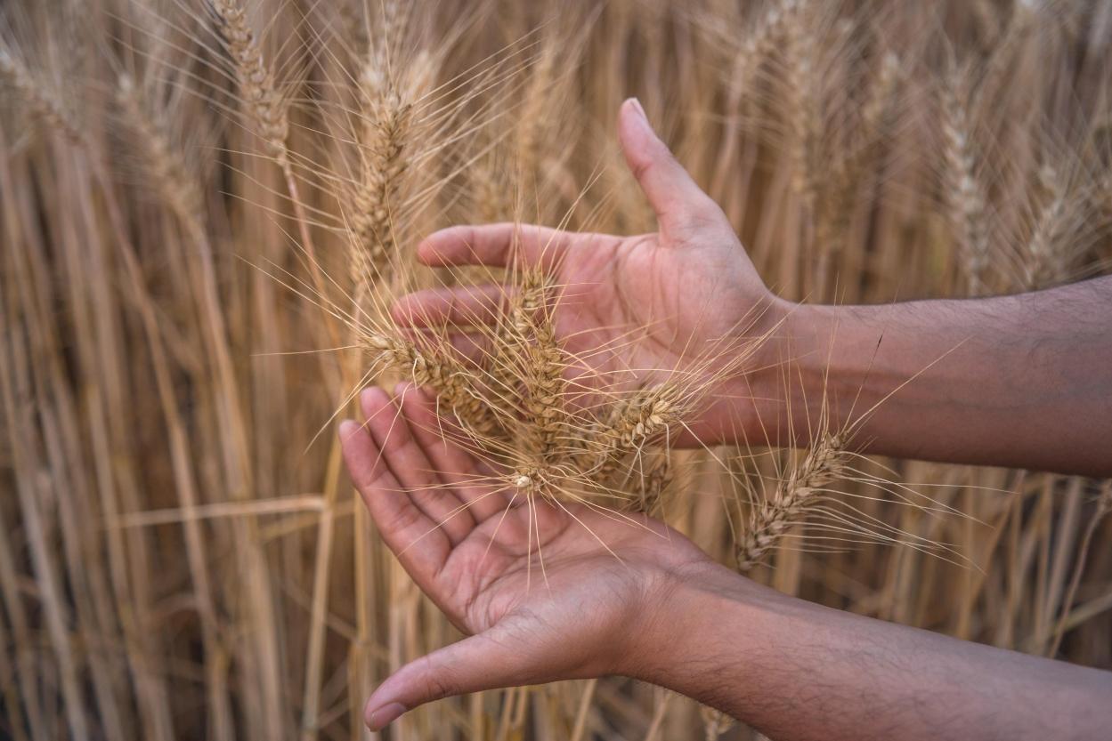 India as the world's farm
