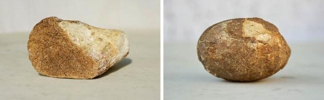 (left) A fossilised limb bone of a  dinosaur on display (right) A fossilised Theropod egg on  display