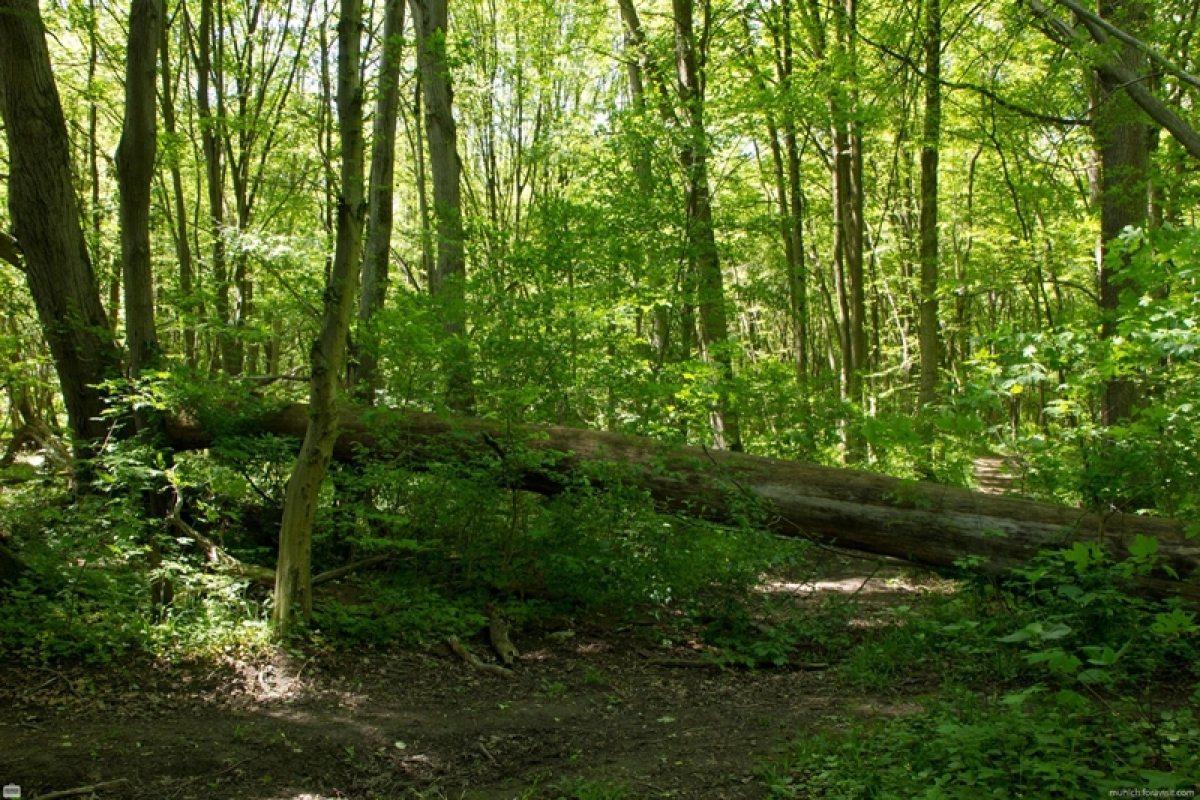 Powers to shoot in forest dubbed as 'little force'