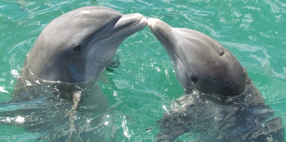 Asia's first Dolphin Research Center to open at Patna University