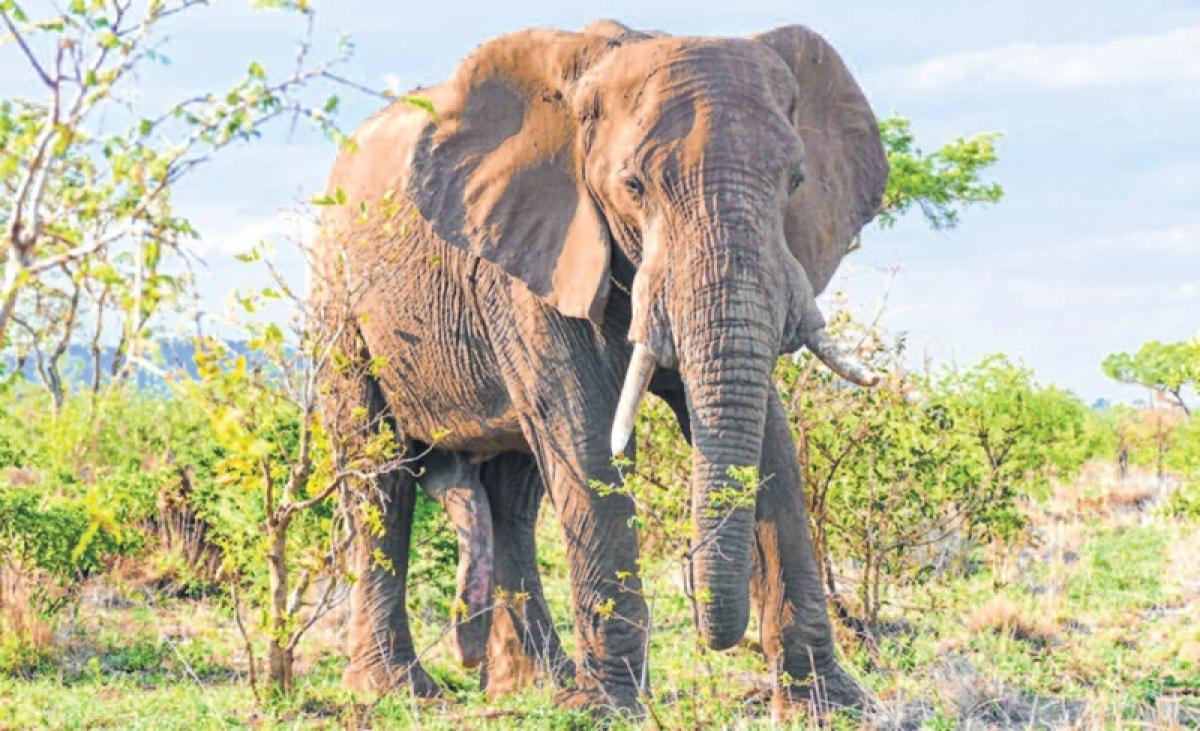 Travel bytes: Wild Trails' innovative Sightings Data Analytics
