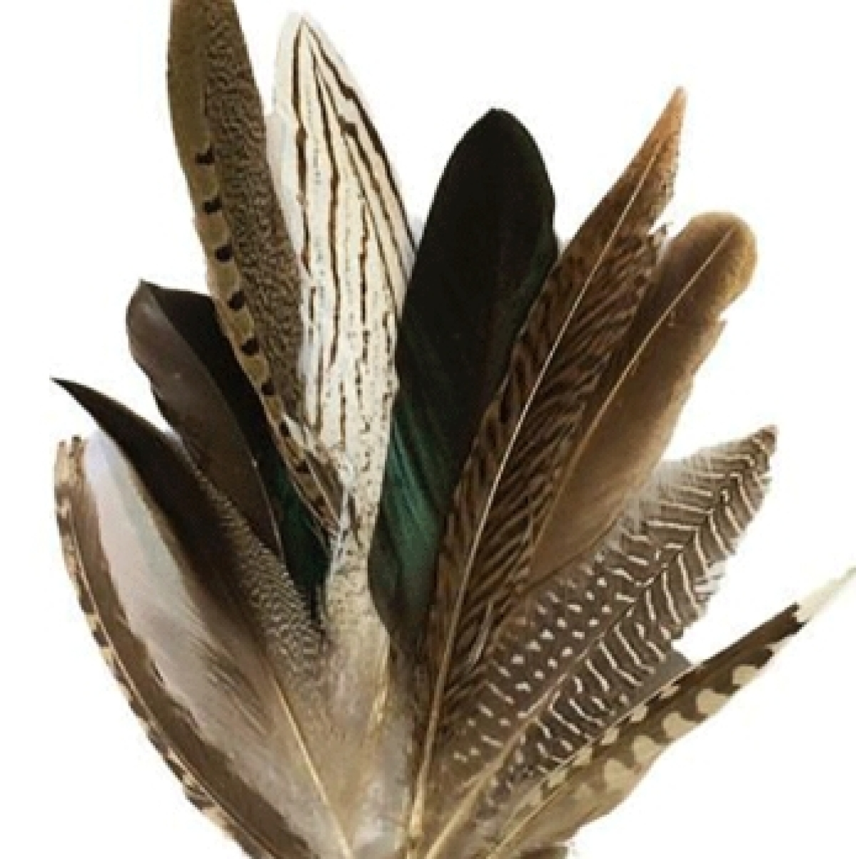 Feathers came before birds, finds study