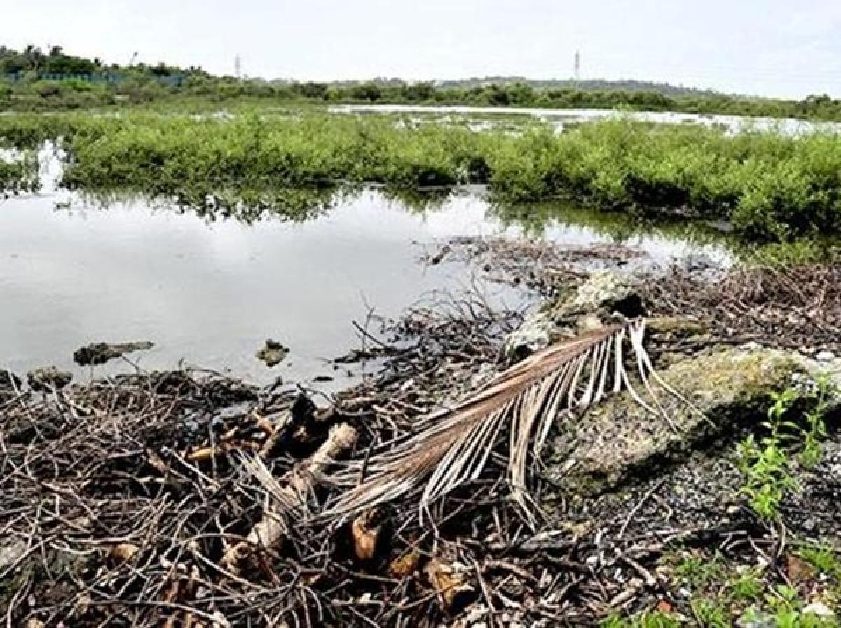 Mangrove Destruction:Action after tweet to CM, turns to be eyewash against dumping mafia