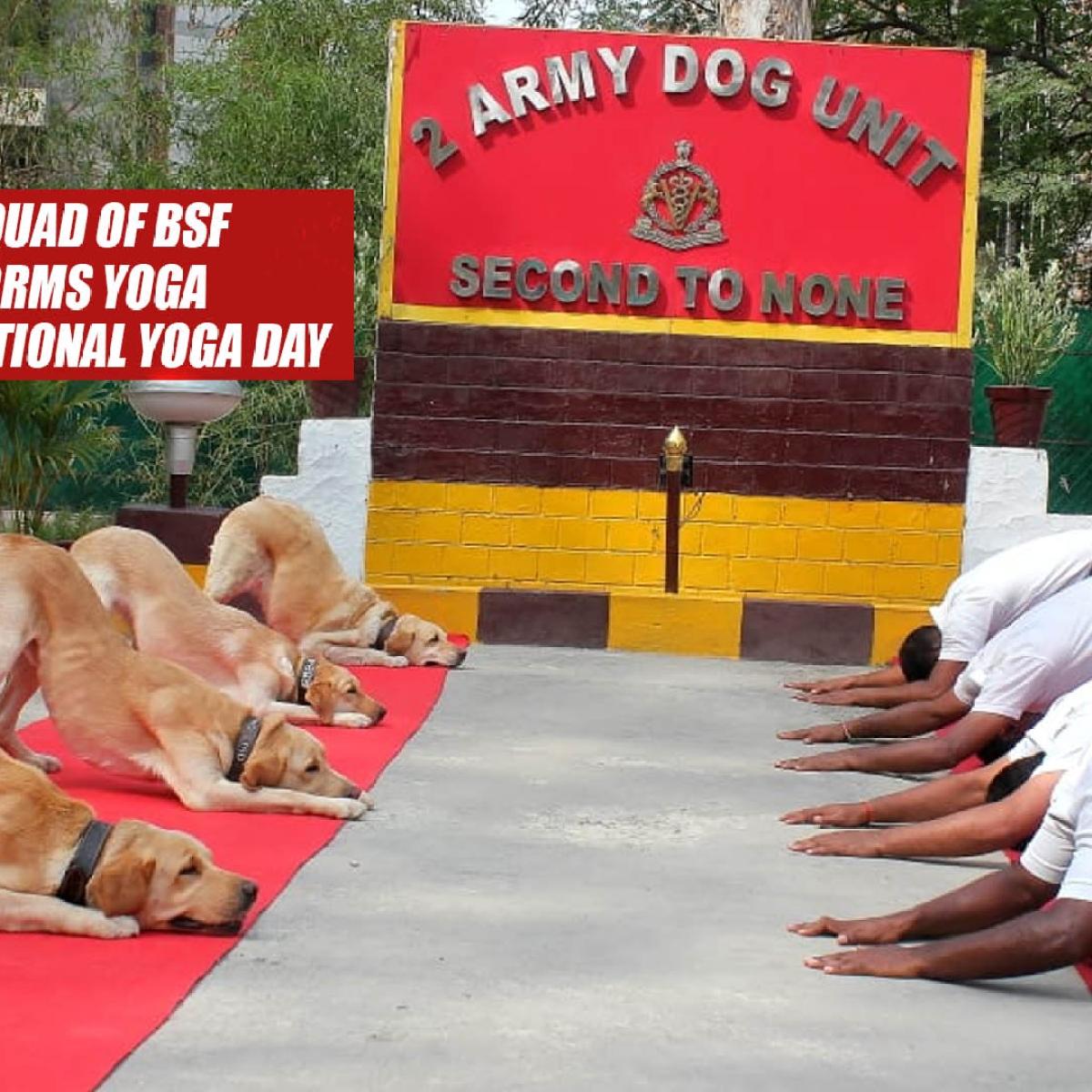 Watch: Dog Squad Of BSF Performs Yoga On 5th International Yoga Day