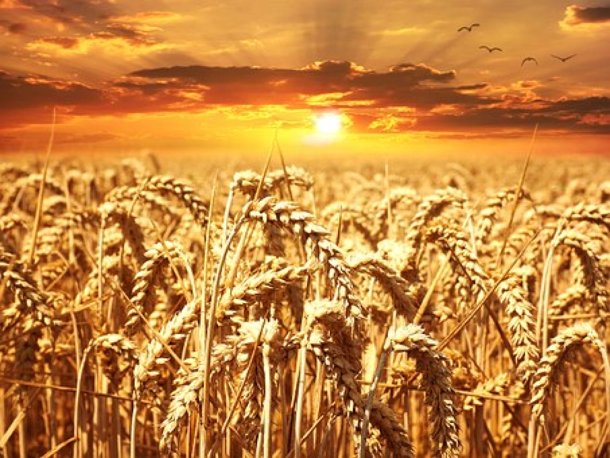 West Bengal government introduces its own crop insurance scheme