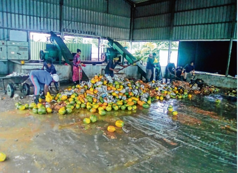 FDA seizes 1,600-kg artificially ripened fruits, destroys 600-kg of papaya