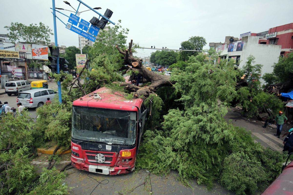 A tree gets uprooted and falls on a bus after heavy rain in Ahmedabad, Gujarat