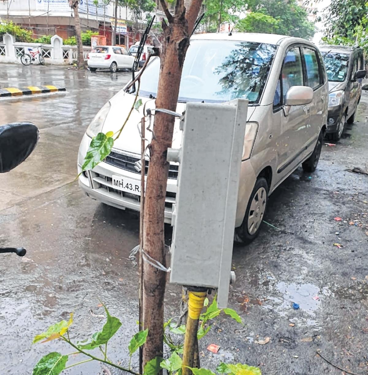 Mumbai: Shocking! 400V box tied to tree