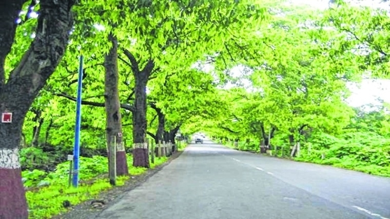 Ujjain: Students take part in plantation drive