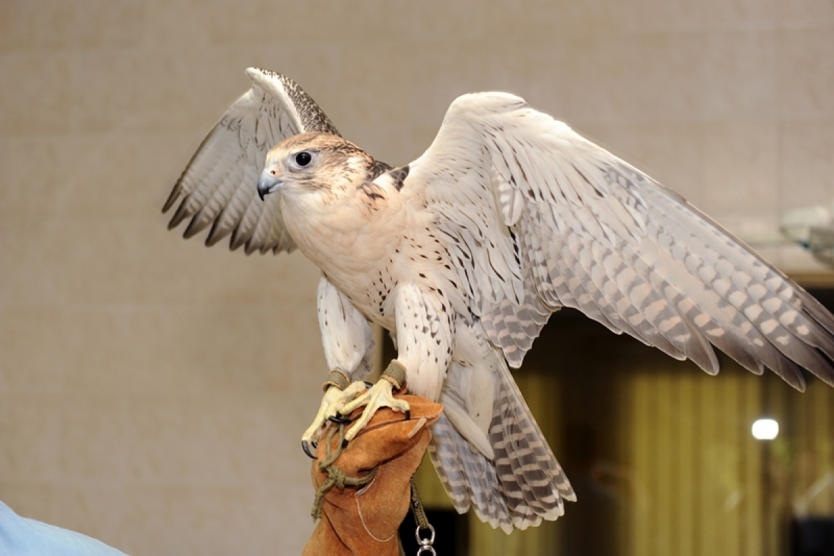 Peregrine falcon has fastest vision speed