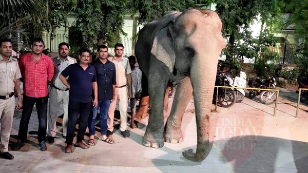 Missing elephant 'Laxmi' found by Delhi Police near headquarters
