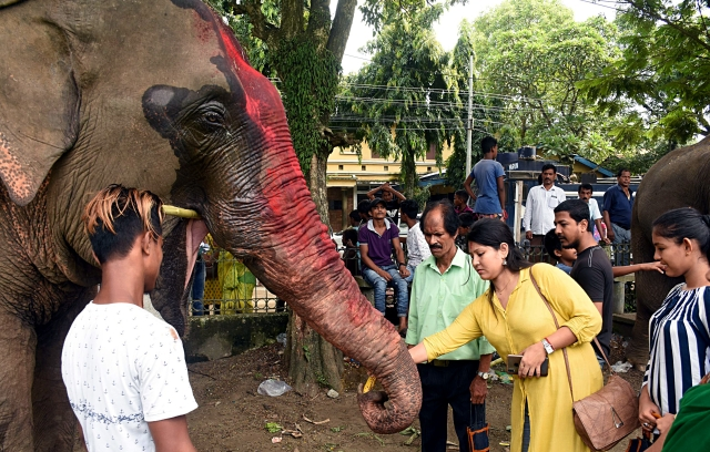 Devotees seek blessing from an elephant on the occasion of Ganesh Chaturthi, at Latshil Ganesh Mandir in Guwahati