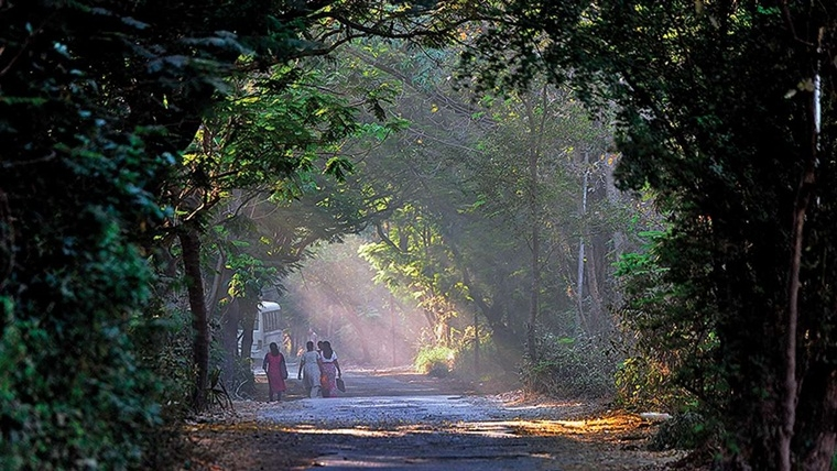 MMRC, BMC chiefs defend need for axing trees at Aarey for Metro-3 amid rising protests