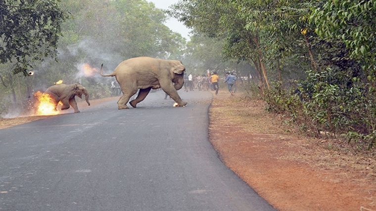 Elephants set on fire