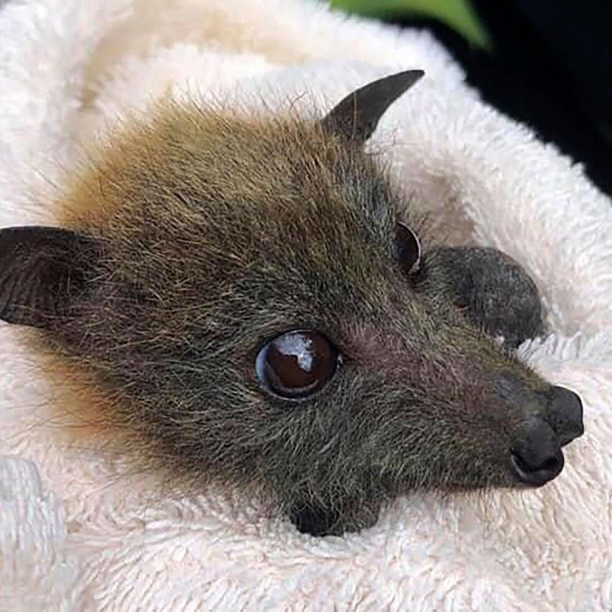 Carcass of rare species of horseshoe bat found in Vidarbha