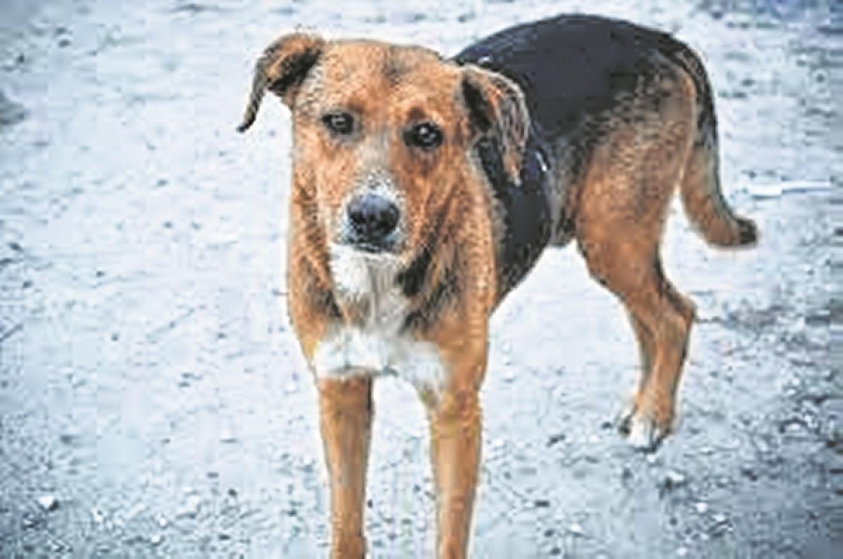 Man hacks dog to death for barking outside butcher's shop