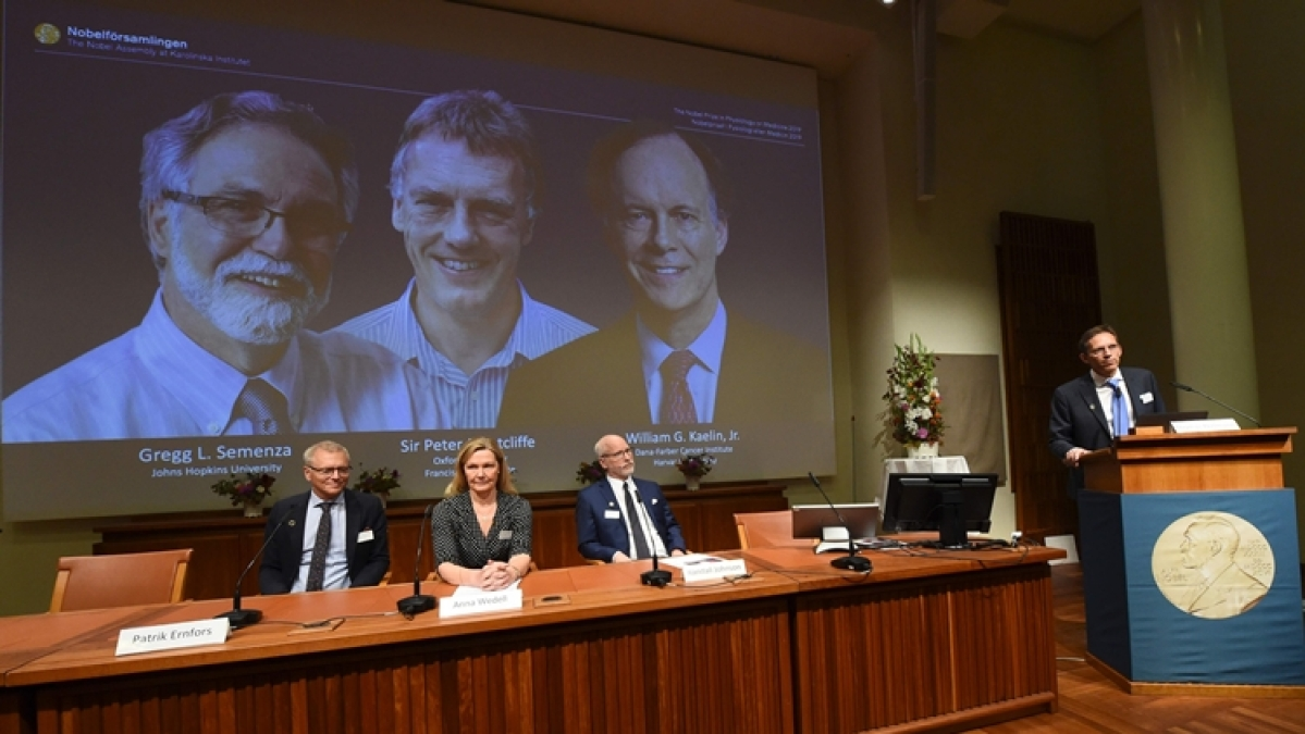 Trio win Nobel Medicine Prize for discovery on how cells sense oxygen, pave way for fighting cancer, anemia