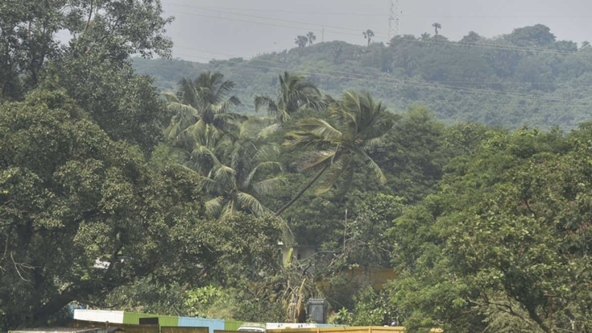 Workers cut-down trees for the Metro car shed project in the Aarey colony of Mumbai.