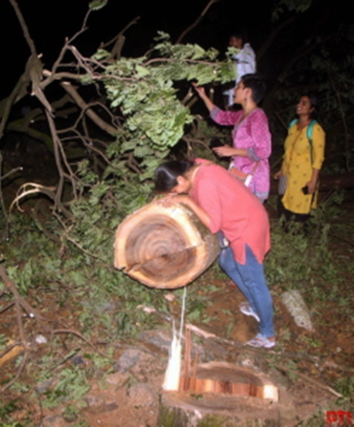 Mumbai: Trees felled in dead of the night