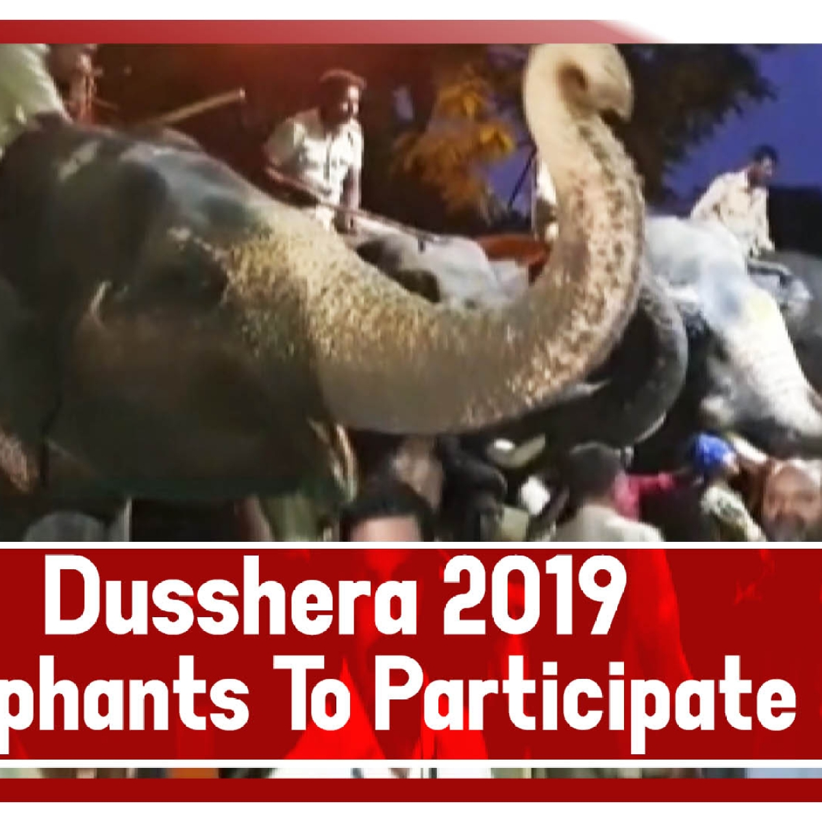 Dusshera 2019: Elephants To Participate In 'Jamboo Savari' Take Blessings At Dargah In Mysuru