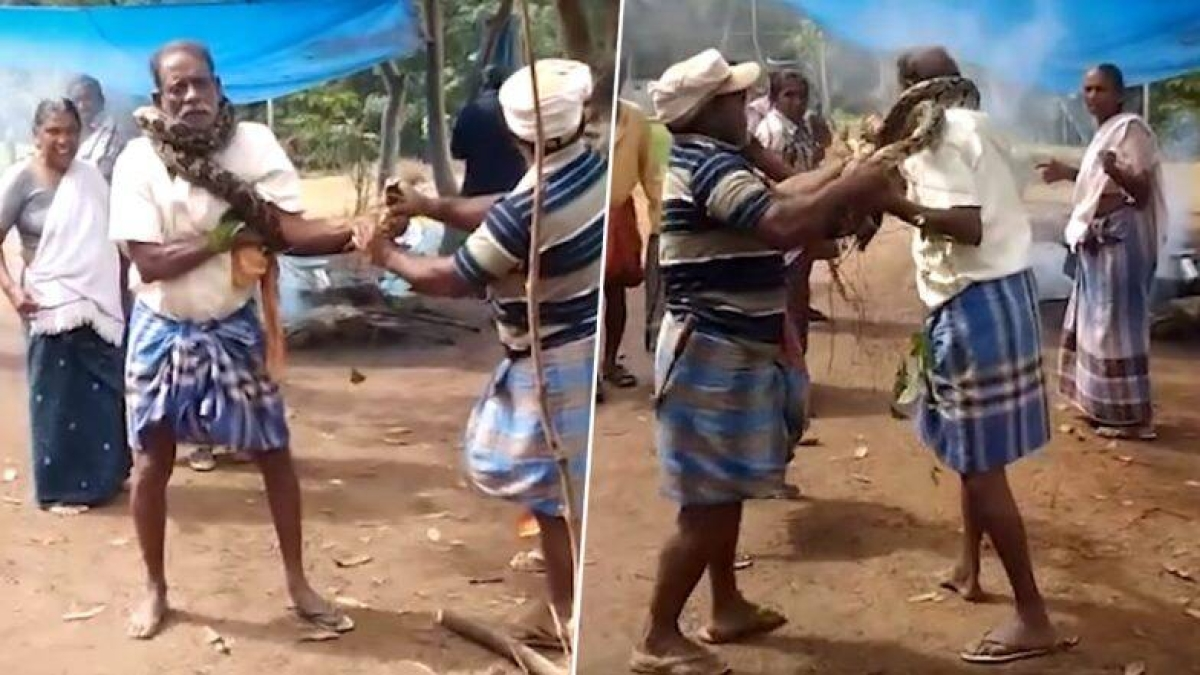 Real Man Vs Wild: Kerala man rescued from 10-foot-long python wrapped around his neck