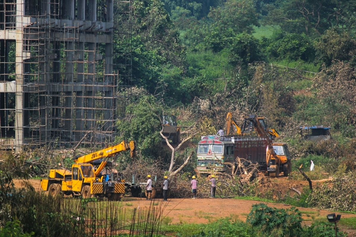 Aarey stay after deed is done