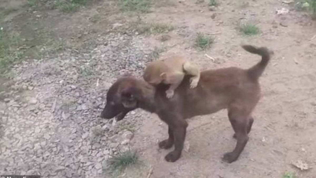 Watch: Adorable video of dog carrying baby monkey to local police station in MP goes viral