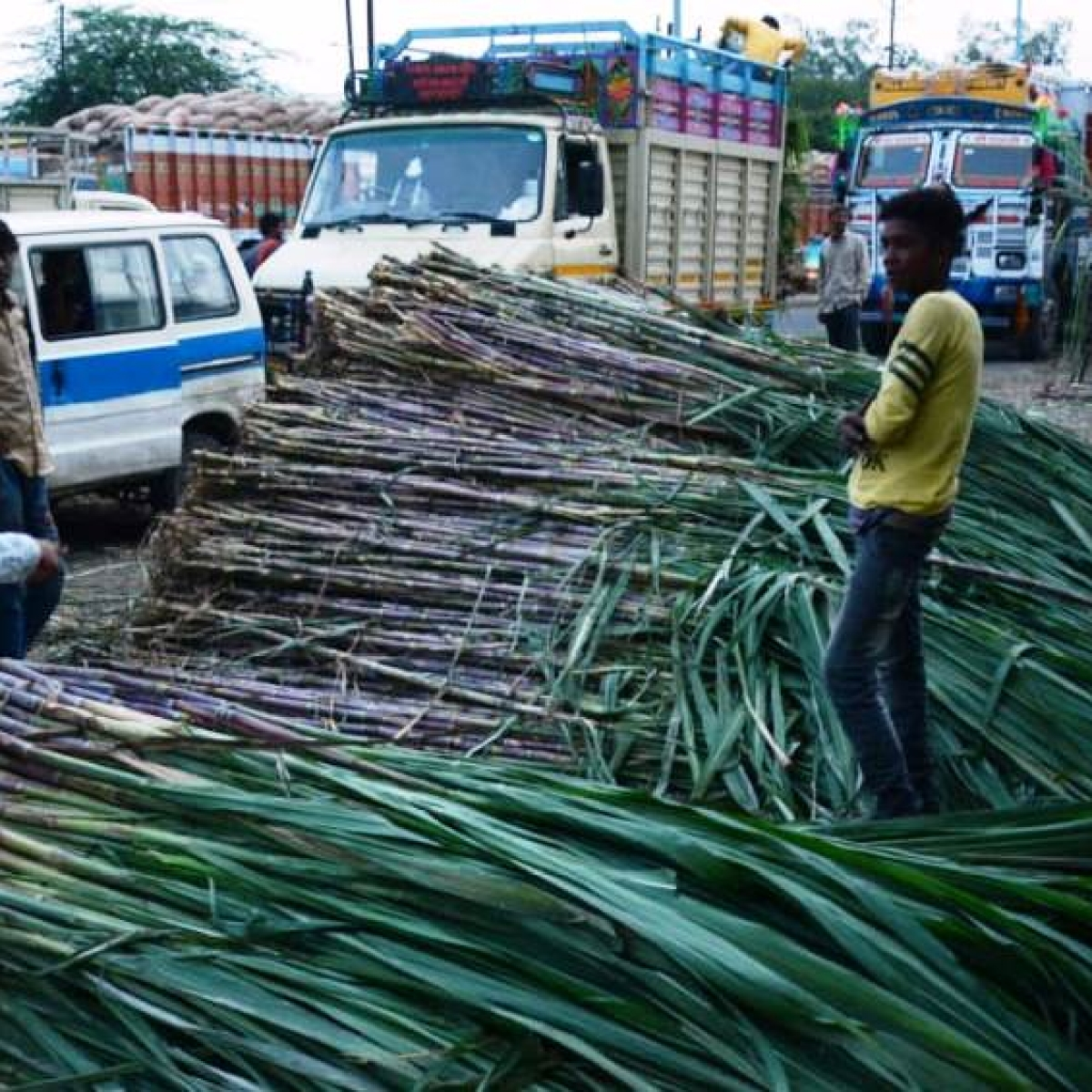 Sugarcane crushing in state to start from November 22